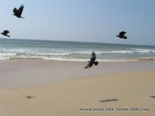 birds at kolva beach goa