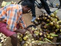 kodaikanal_hill_station_tamilnadu_india_14 (23)