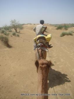 camel safari in Jaisalmer, India