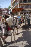 transportation in jodhpur