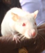 rats_of_delhi_india_ (3)