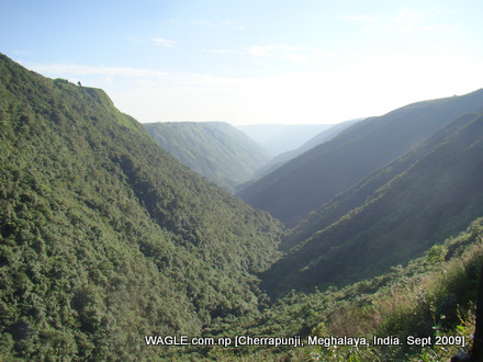 cherrapunji jungle