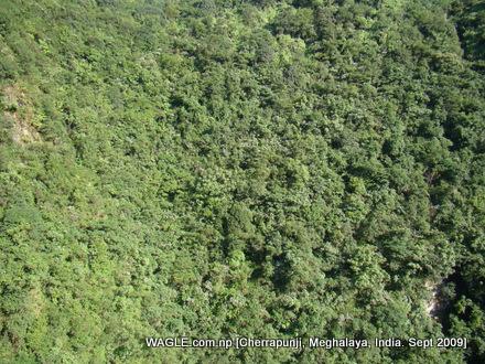 jungle of cherrapunji
