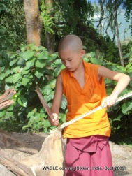 monk of gangtok, sikkim