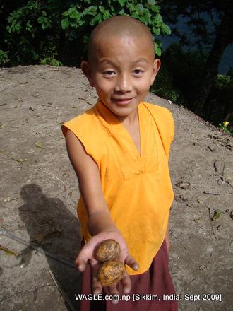 buddhist monk of gangtok, sikkim