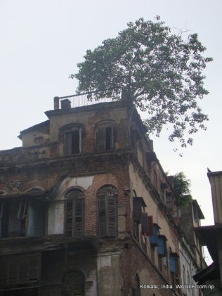 Tree at the top of a house in Kolkata
