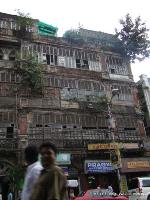 trees on houses of kolkata streets