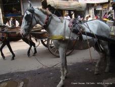 horse in cart in old delhi road
