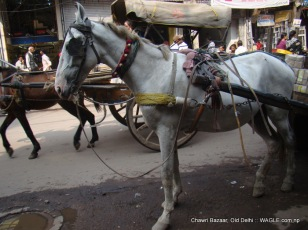horse in cart in old delhi road
