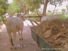 waste in taj mahal