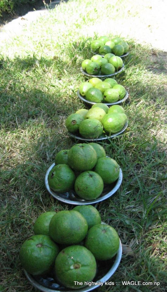 highway kids of nepal. guava for sale on roadside