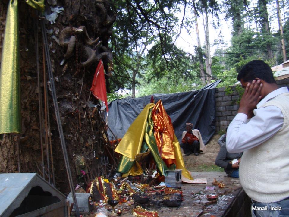 Ghatotkacha Tree