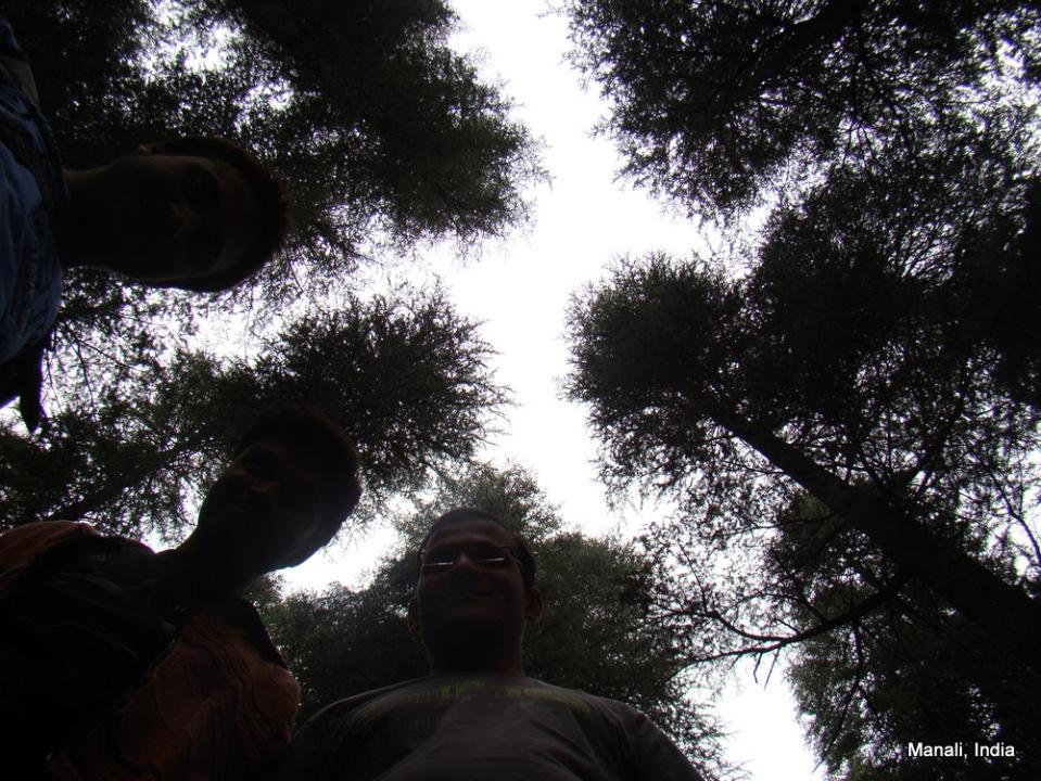 gokul, pavan, rajesh & trees