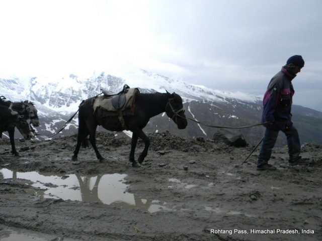 man and horse in snow rohtang pass himachal pradesh india