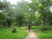 green garden of pondicherry