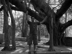 A human and a banyan tree