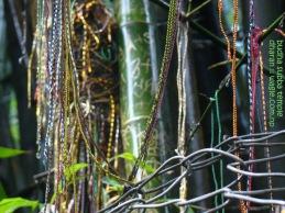Bamboos of Budha Subba