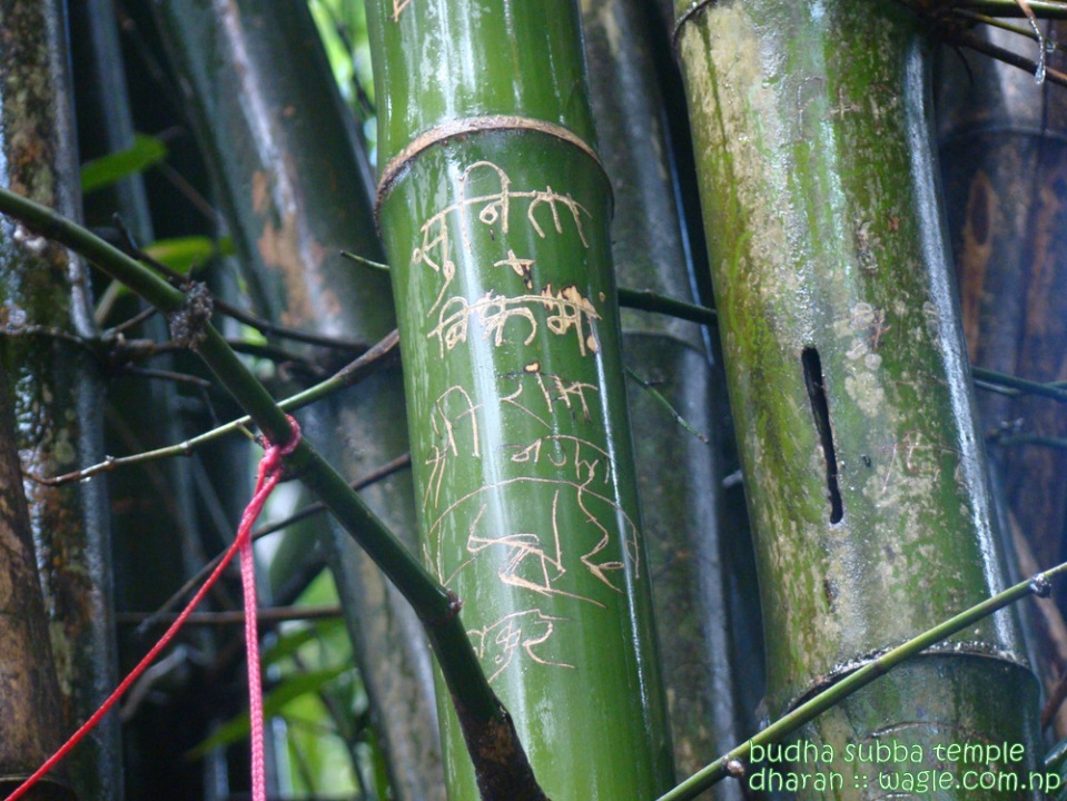 Lover's Bamboos