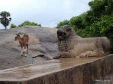 A Goat and a Lion Mahabalipuram, India stone carving