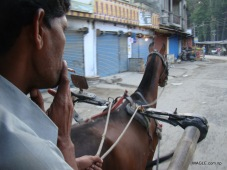 Horse Cart rider at Nepal India border