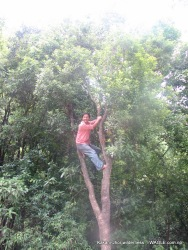 The Kafal tree of Shivapuri jungle: Kathmandu Kakani Jhor Hiking (53)
