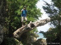 over a fallen tree