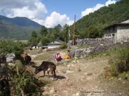 dhorpatan nepal (9)