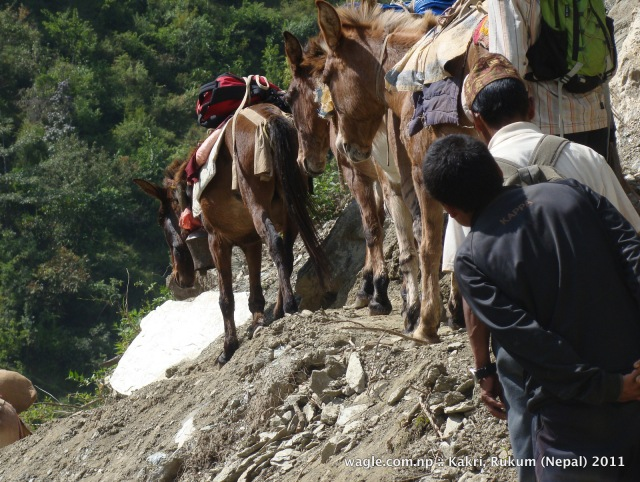 mules and dangerous trail