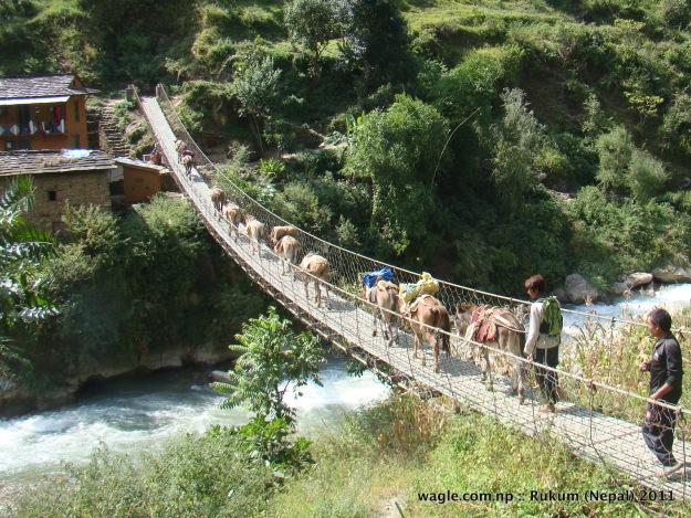 mules crossing a suspension bridge