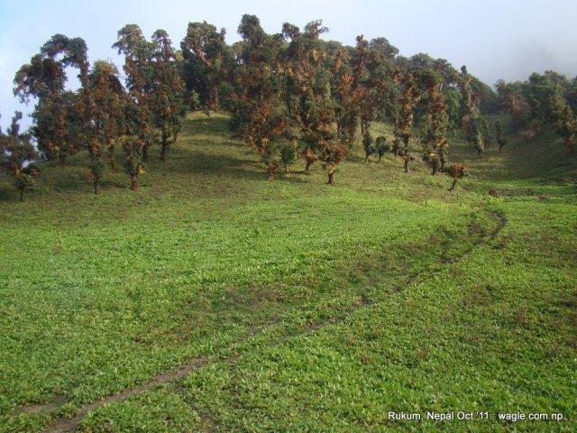 """Dhuri"" aka top of Cubang hill where DW got lost"