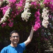 JNU Flowers DW