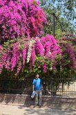 JNU Flowers