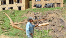 A farmer in Chitlang with his plough on his shoulder
