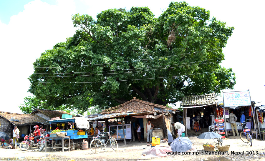 Fruit and vegetable market at Pipra- a small village that lies between Dhansuha and Mahottari. The road that connects these two districts is so bad that it makes people traveling in vehicles sick.
