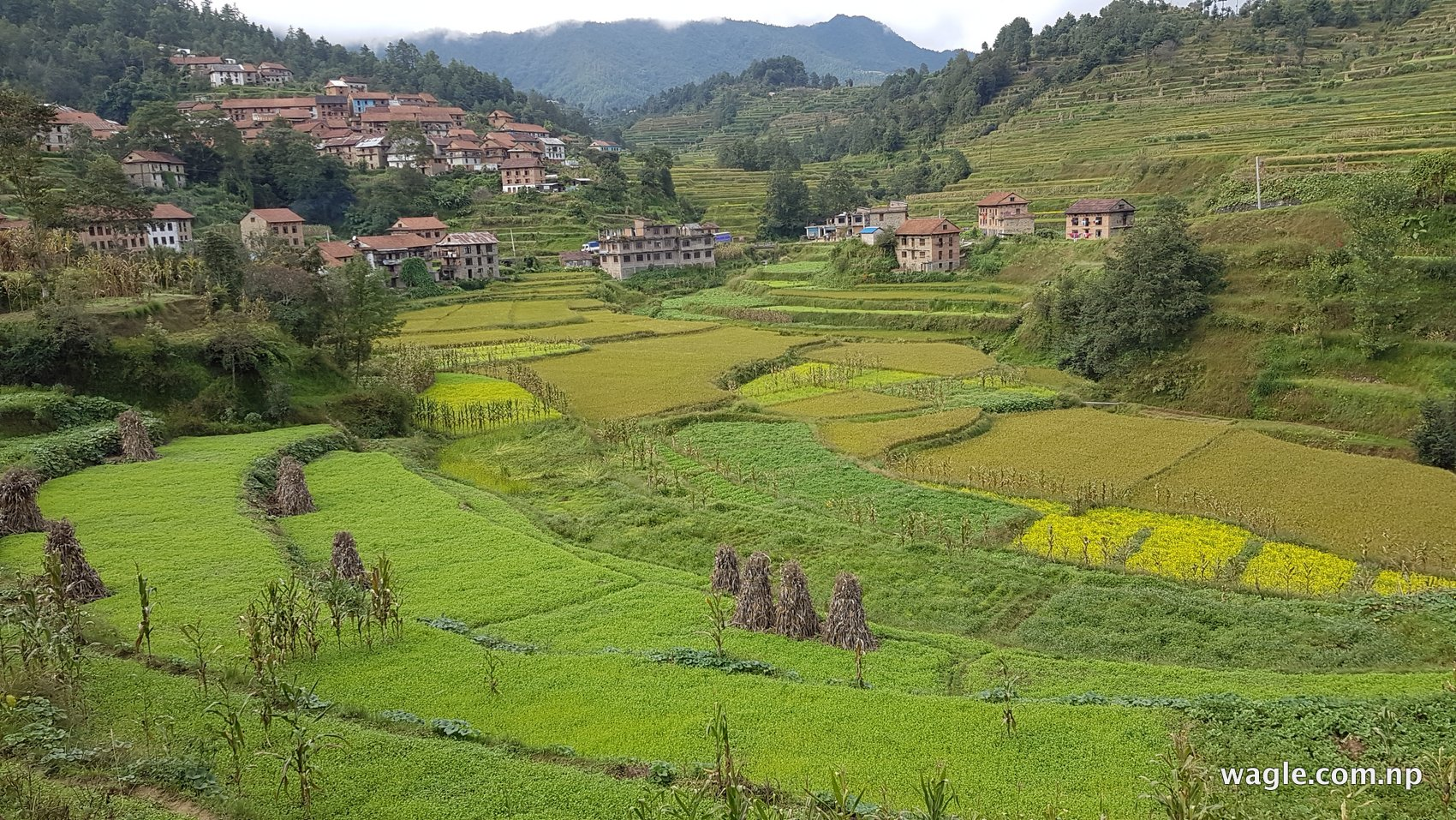 Gopali people live in the Kunchhal neighbourhood of Bajrabarahi valley. Fields and houses.
